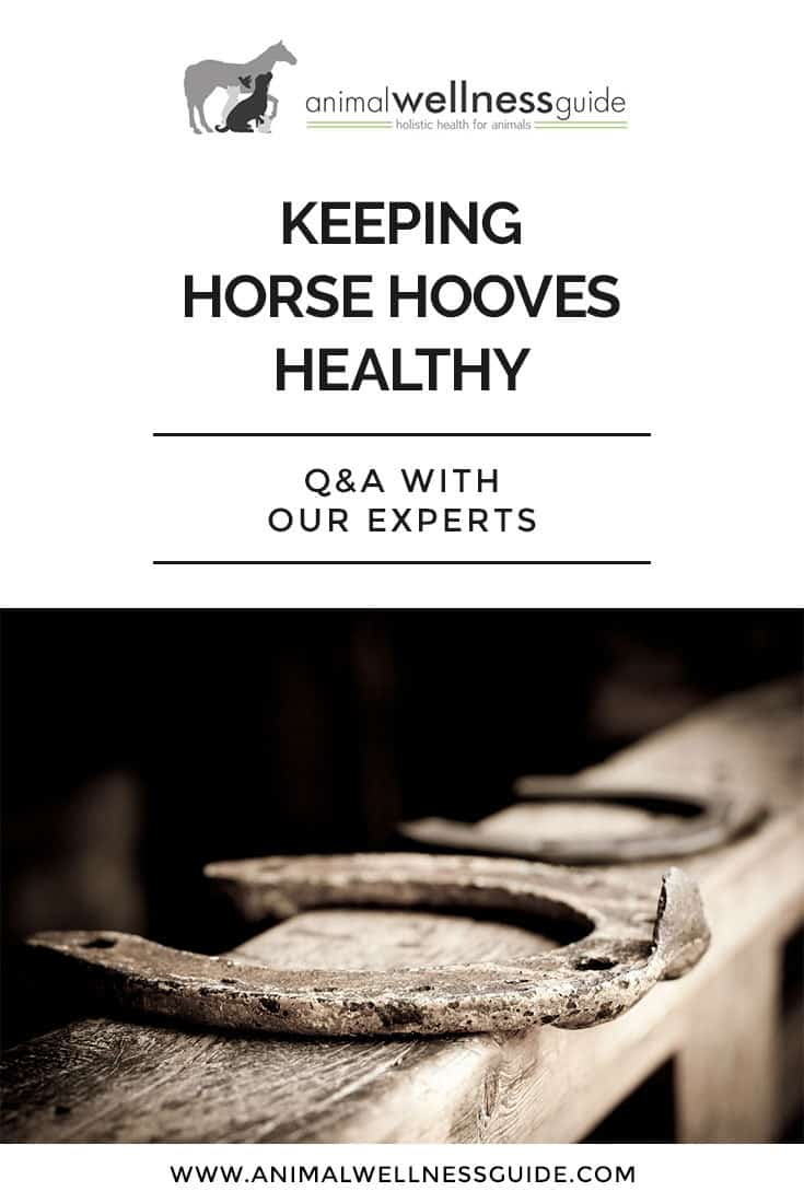 Our experts share their best horse hoof care tips, and opinions on whether letting your horse go barefoot is a good idea.