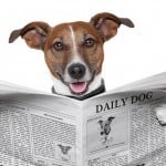 Dog-newspaper-feat-img