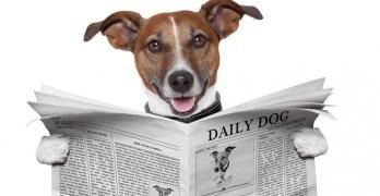 Dog-newspaper-feat-img