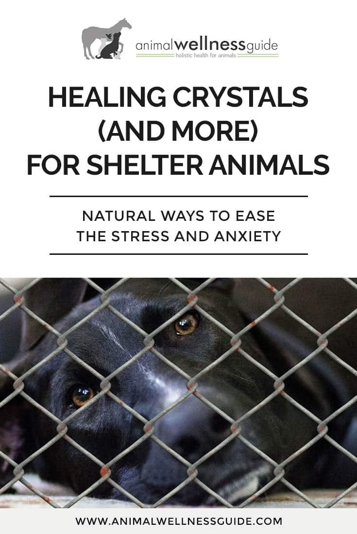 Learn which healing crystals and other natural remedies can help the stress and anxiety of shelter animals, as well as the people working there.