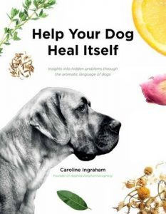 Help Your Dog Heal Itself: Using Essential Oils with Dogs