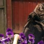 Cat-w-flowers