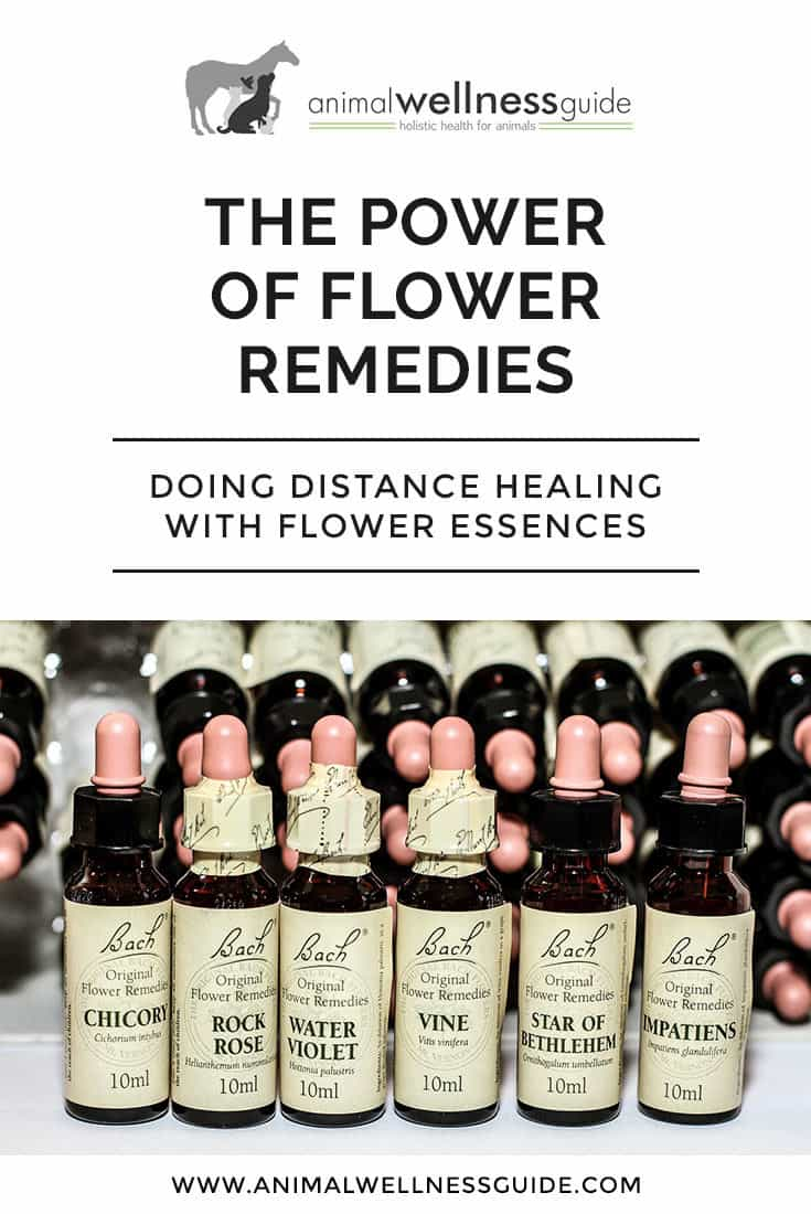Can flower essence remedies be used in distance healing? Practitioner Caroline Thomas shares her thoughts and a case study.