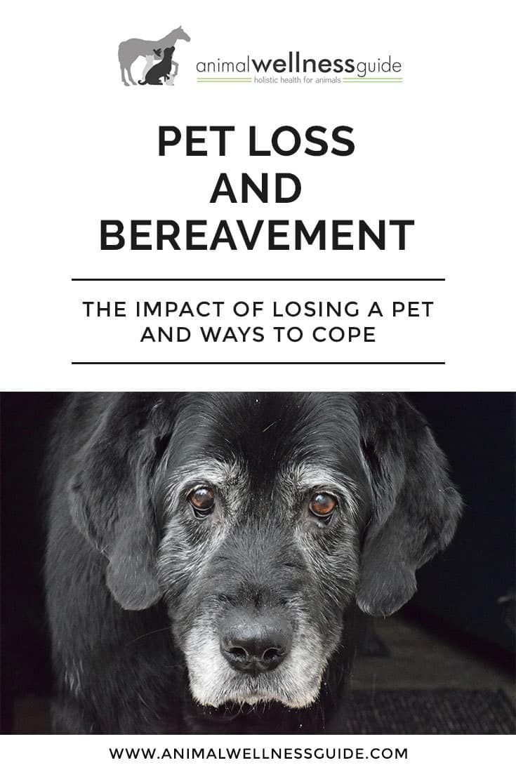 Holistic veterinarian Dr. Beth Innis talks about pet loss, the grieving process and different ways of coping with grief.