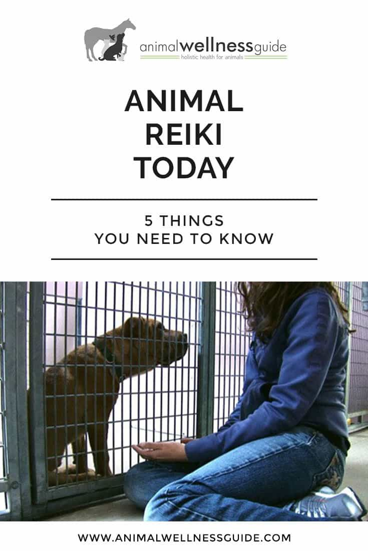Reiki healing for animals: What is it and how does it work?