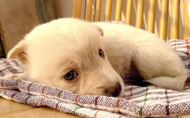 Acupressure-Massage for Puppy Mill Survivors