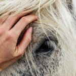 Equine Reiki book excerpt part 2 Animal Wellness Guide