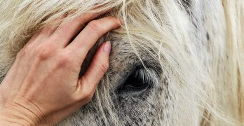 Healing Horses With Reiki: Heart To Heart With Horses Part 2