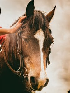 Equine Reiki healing - Animal Wellness Guide