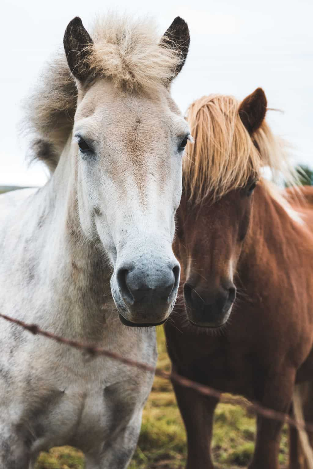 Healing horses with Reiki - Animal Wellness Guide