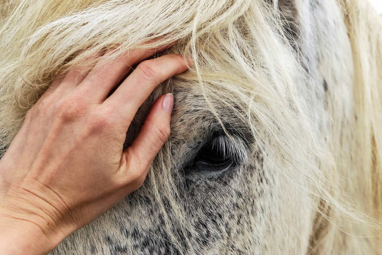 Reiki energy healing for horses - Animal Wellness Guide