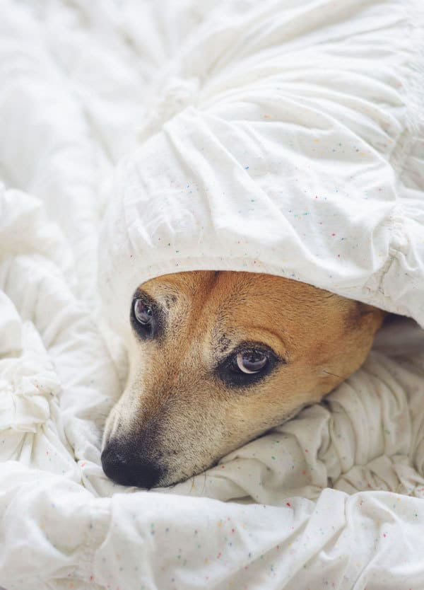Signs of stress in dogs | Animal Wellness Guide