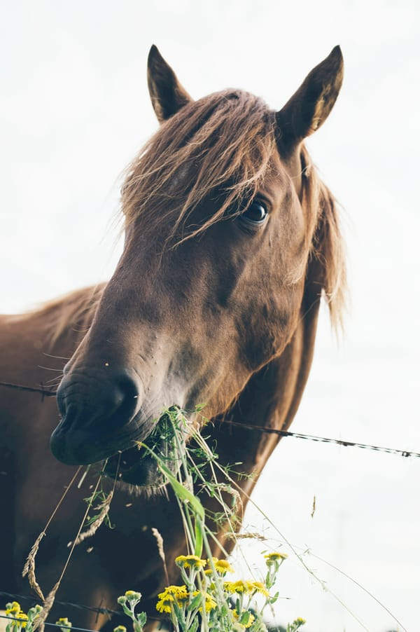 Tui Na Massage for horses | Animal Wellness Guide